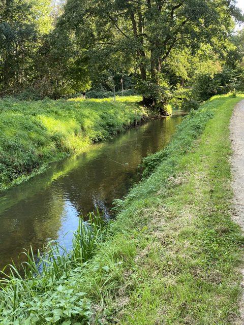 Klimaschutz in Langenhagen. Die Wietze renaturieren.